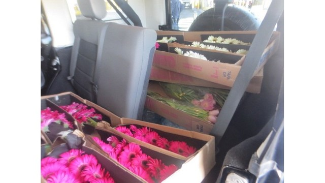 CBP uncovers floral violations during Mother's Day effort