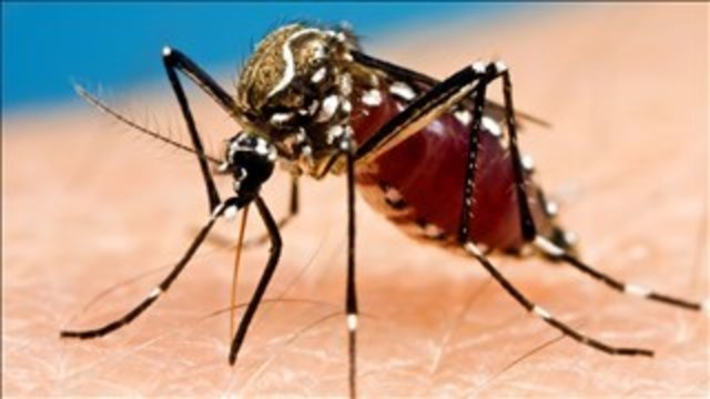 Mosquitoes Found with St. Louis Encephalitis
