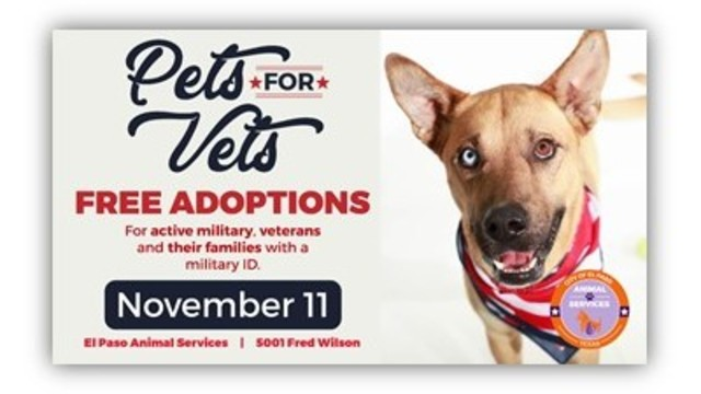 Local shelter waives adoption fees on Veterans Day