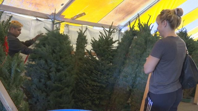 Keeping safe with live Christmas trees
