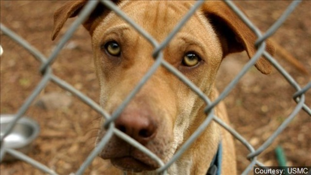 Animal Services to waive reclaim fees during holidays